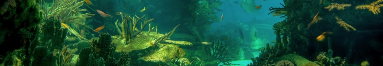 The power of algae- Hotel NEMO, Photo № 1