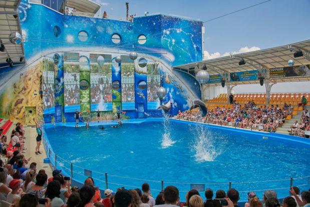 Шоу с дельфинами в RESORT & SPA HOTEL NEMO, фото № 2