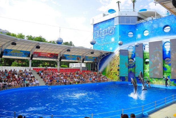 Шоу с дельфинами в RESORT & SPA HOTEL NEMO, фото № 3