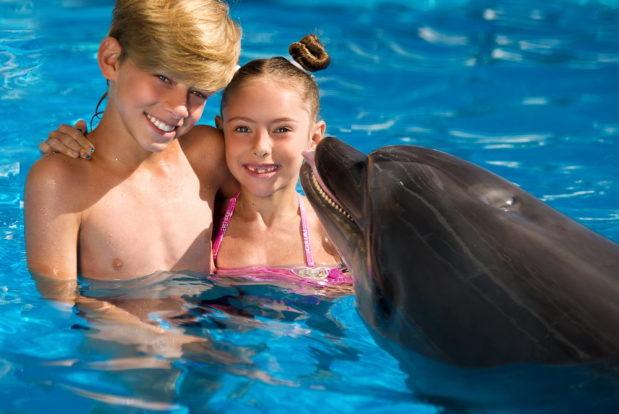 Schwimmen und tauchen mit delphinen im RESORT & SPA HOTEL NEMO, foto № 5