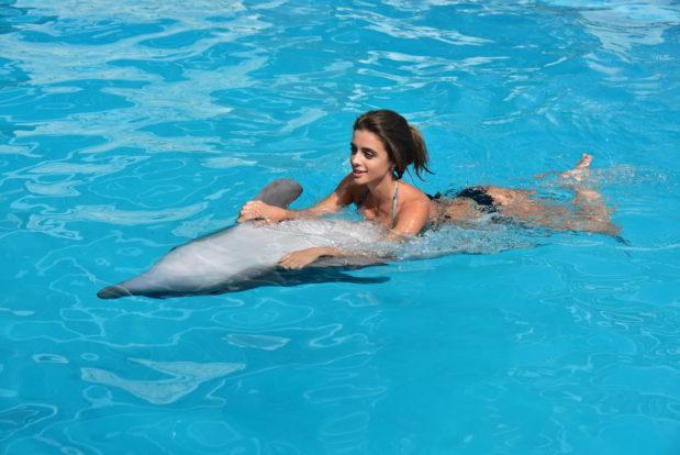 Schwimmen und tauchen mit delphinen im RESORT & SPA HOTEL NEMO, foto № 20