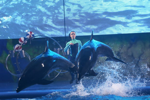 Dolphin show in RESORT & SPA HOTEL NEMO, photo № 9