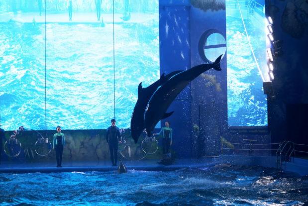 Шоу с дельфинами в RESORT & SPA HOTEL NEMO, фото № 19