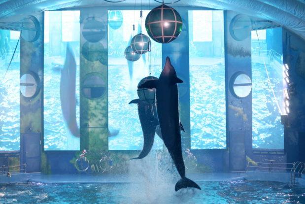 Dolphin show- Hotel NEMO, Photo № 17