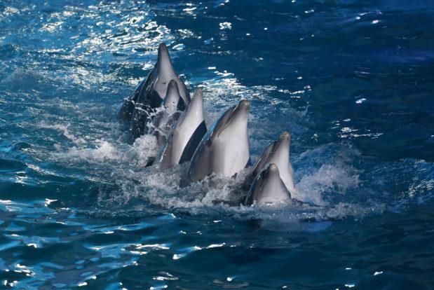 Шоу с дельфинами в RESORT & SPA HOTEL NEMO, фото № 21