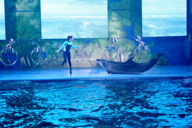 Dolphin show- Hotel NEMO, Photo № 19