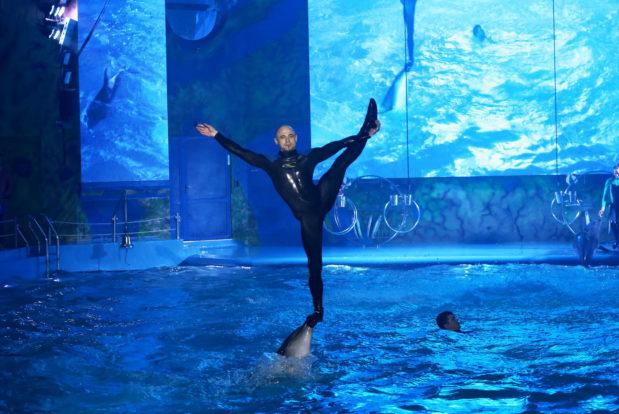 Dolphin show- Hotel NEMO, Photo № 16
