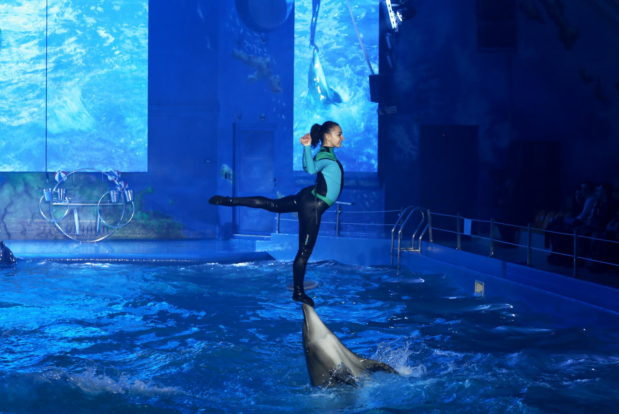Dolphin show in RESORT & SPA HOTEL NEMO, photo № 17