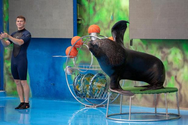 Шоу с дельфинами в RESORT & SPA HOTEL NEMO, фото № 4