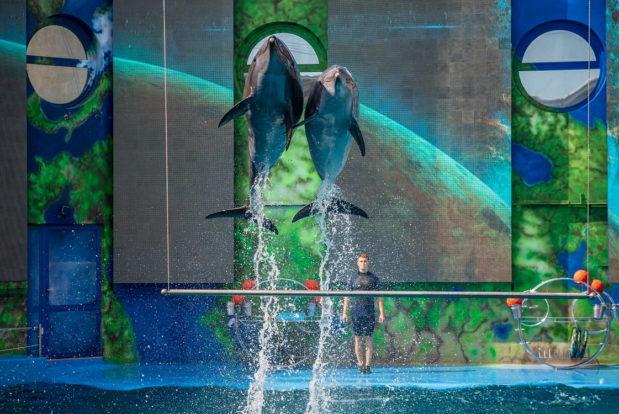 Шоу с дельфинами в RESORT & SPA HOTEL NEMO, фото № 5