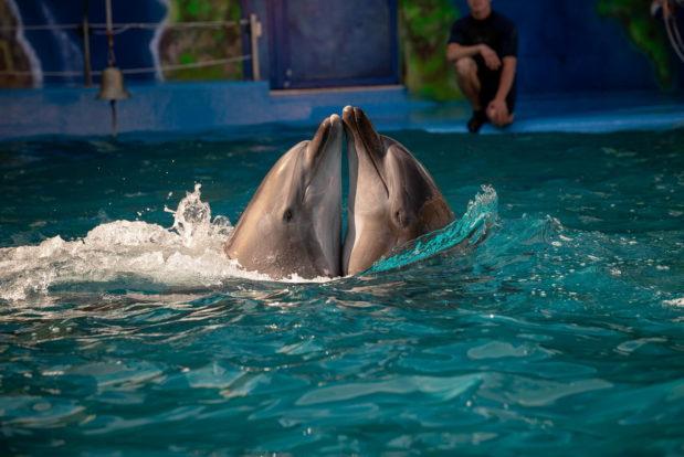 Шоу с дельфинами в RESORT & SPA HOTEL NEMO, фото № 6
