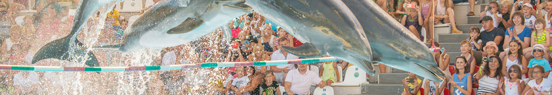 Шоу с дельфинами в RESORT & SPA HOTEL NEMO, фото № 1
