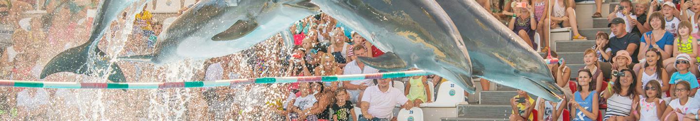 Dolphin show- Hotel NEMO, Photo № 1