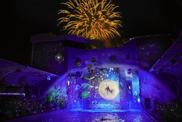 Dolphin show- Hotel NEMO, Photo № 47