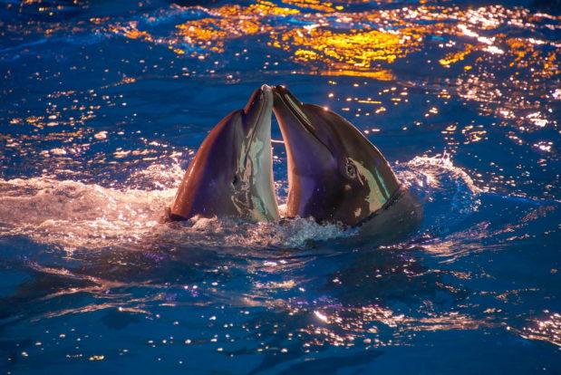 Dolphin show- Hotel NEMO, Photo № 46
