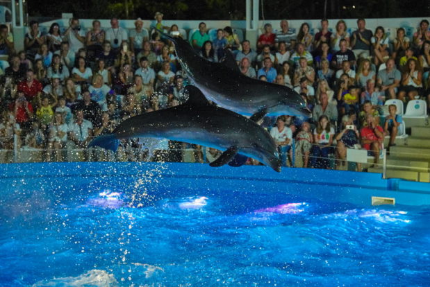 Dolphin show in RESORT & SPA HOTEL NEMO, photo № 44