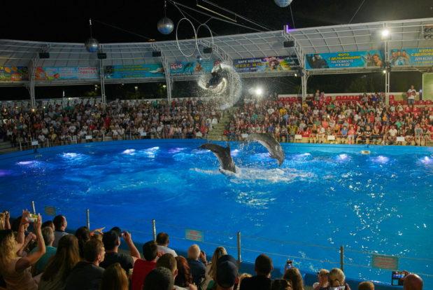 Dolphin show- Hotel NEMO, Photo № 43