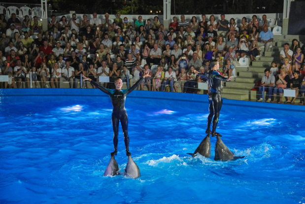 Dolphin show in RESORT & SPA HOTEL NEMO, photo № 42