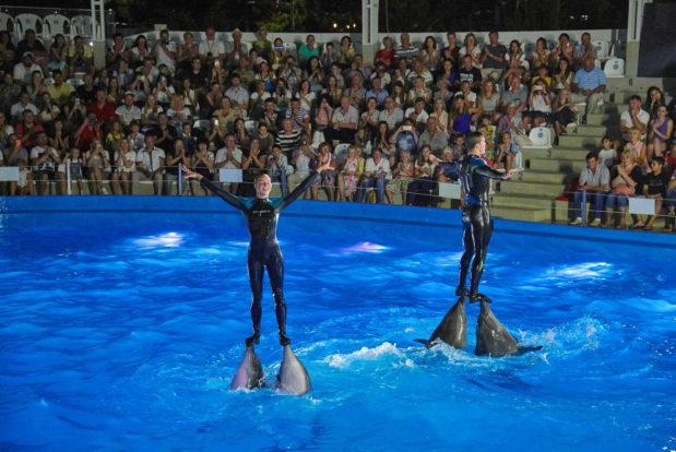 Dolphin show- Hotel NEMO, Photo № 42