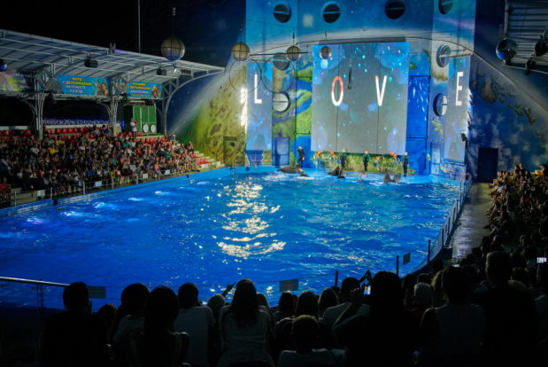 Dolphin show in RESORT & SPA HOTEL NEMO, photo № 41