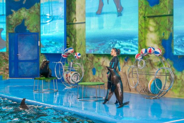 Шоу с дельфинами в RESORT & SPA HOTEL NEMO, фото № 13