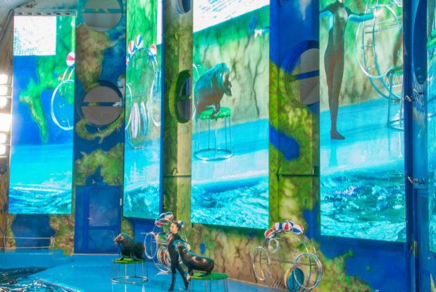 Шоу с дельфинами в RESORT & SPA HOTEL NEMO, фото № 14