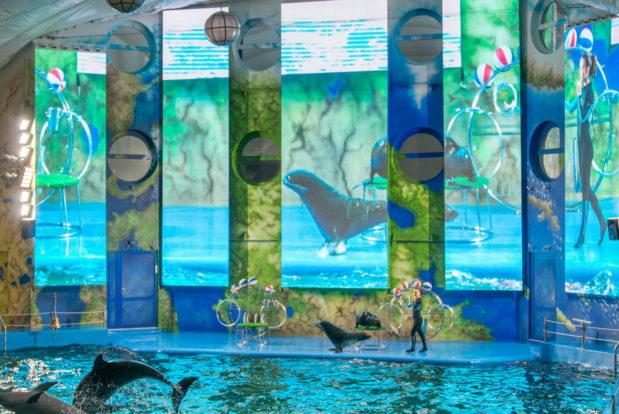 Шоу с дельфинами в RESORT & SPA HOTEL NEMO, фото № 16