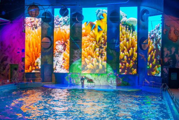 Шоу с дельфинами в RESORT & SPA HOTEL NEMO, фото № 27