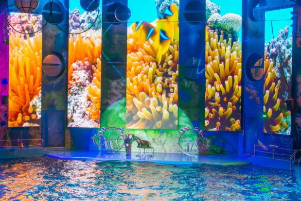Dolphin show- Hotel NEMO, Photo № 25