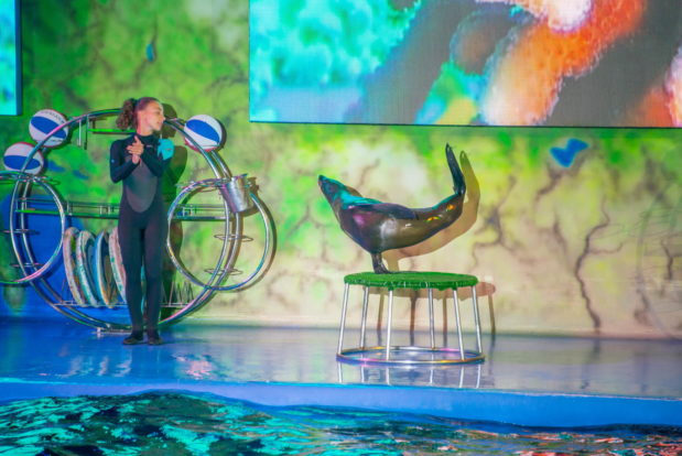 Dolphin show- Hotel NEMO, Photo № 26