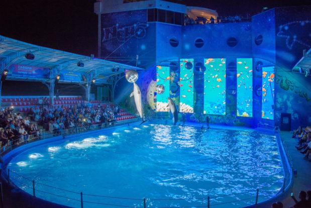 Шоу с дельфинами в RESORT & SPA HOTEL NEMO, фото № 30