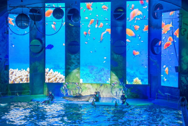 Dolphin show- Hotel NEMO, Photo № 23