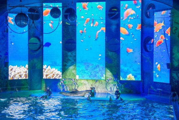 Шоу с дельфинами в RESORT & SPA HOTEL NEMO, фото № 31