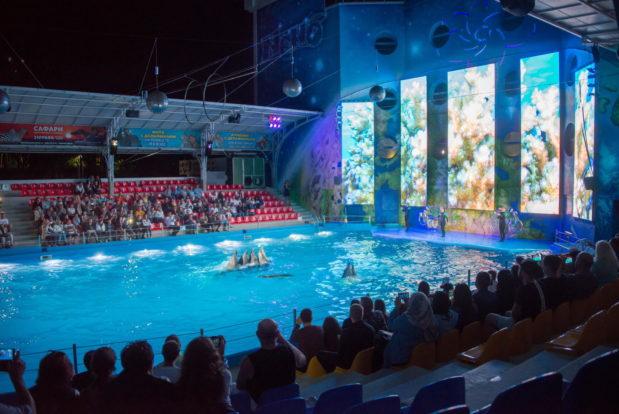 Шоу с дельфинами в RESORT & SPA HOTEL NEMO, фото № 32