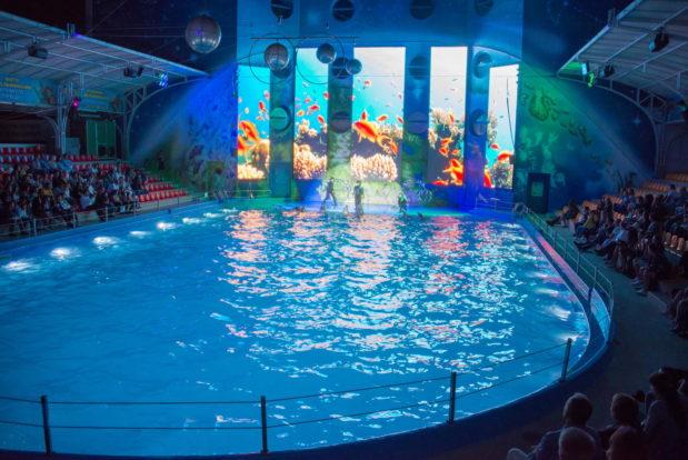 Шоу с дельфинами в RESORT & SPA HOTEL NEMO, фото № 33