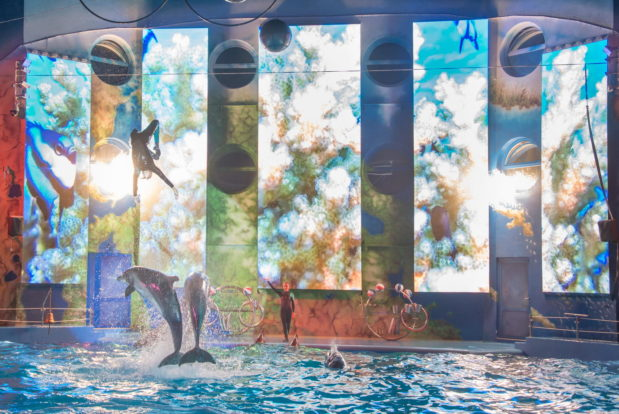 Dolphin show in RESORT & SPA HOTEL NEMO, photo № 27