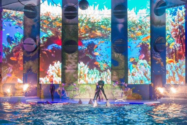 Шоу с дельфинами в RESORT & SPA HOTEL NEMO, фото № 36