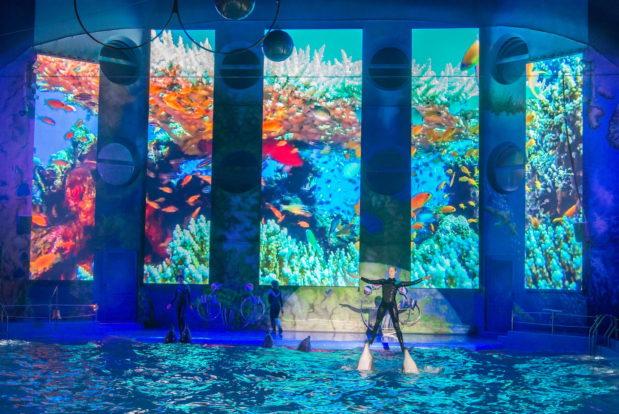 Шоу с дельфинами в RESORT & SPA HOTEL NEMO, фото № 37