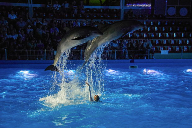 Dolphin show in RESORT & SPA HOTEL NEMO, photo № 39