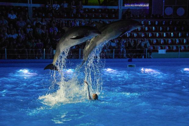 Dolphin show- Hotel NEMO, Photo № 39