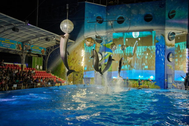 Dolphin show in RESORT & SPA HOTEL NEMO, photo № 36