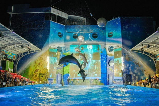 Dolphin show in RESORT & SPA HOTEL NEMO, photo № 35