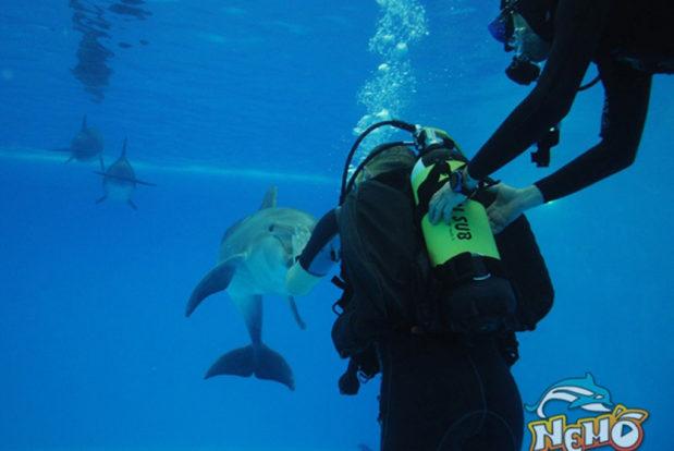 Diving school nemo- Hotel NEMO, Foto № 2