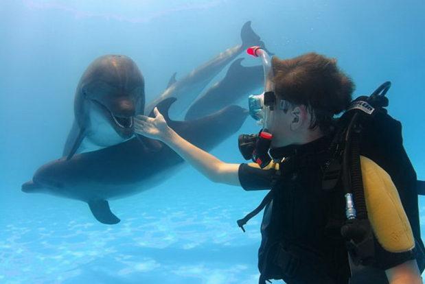 Diving school nemo- Hotel NEMO, Foto № 8