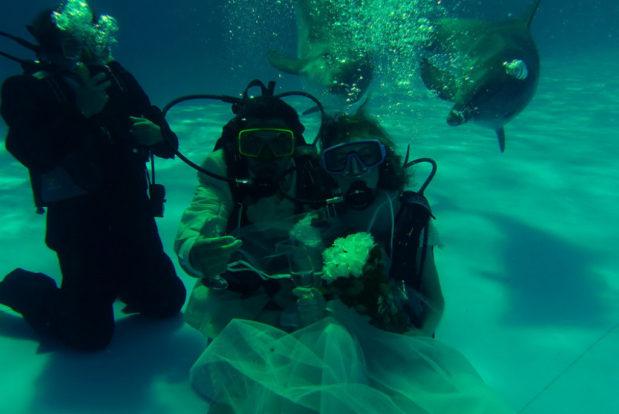 Diving school nemo- Hotel NEMO, Foto № 9