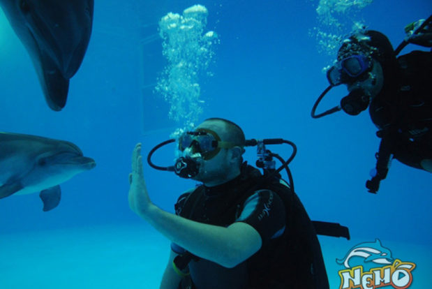 Diving school nemo- Hotel NEMO, Foto № 4