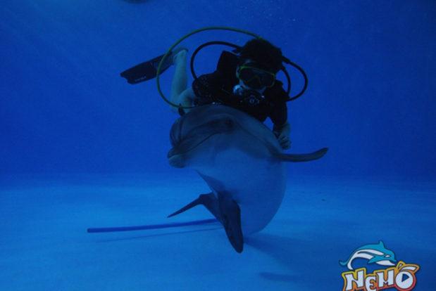 Diving school nemo- Hotel NEMO, Foto № 5