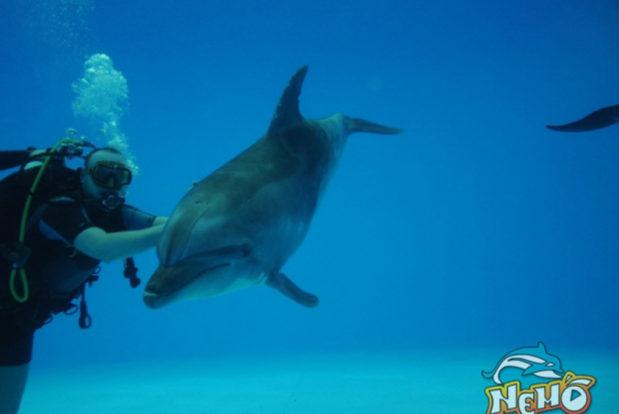Diving school nemo- Hotel NEMO, Foto № 6