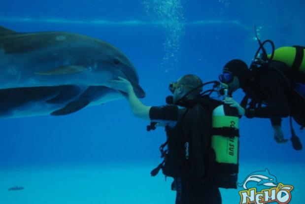 Diving school nemo- Hotel NEMO, Foto № 7