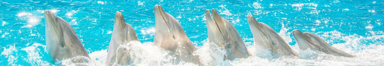 Шоу с дельфинами - NEMO Resort & SPA в Одессе, фото № 1